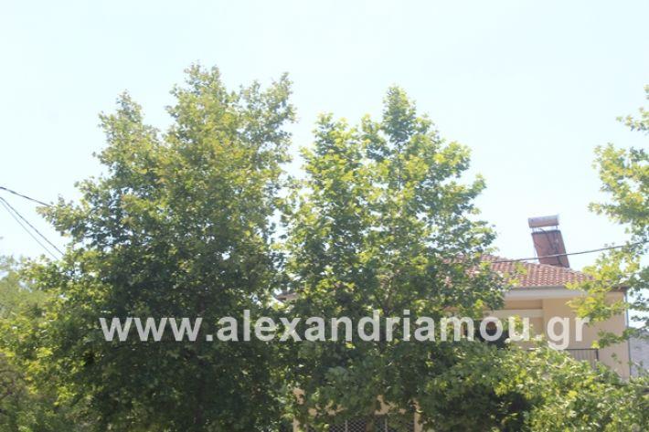 alexandriamou.gr_dentrapanagia2019016