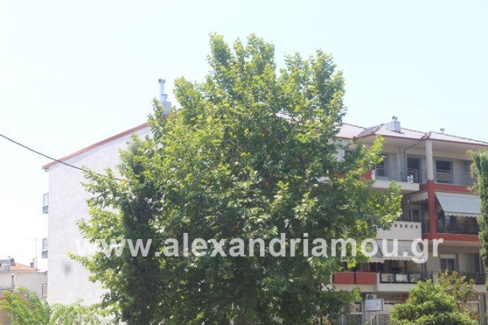 alexandriamou.gr_dentrapanagia2019018