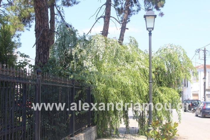 alexandriamou.gr_dentrapanagia2019024