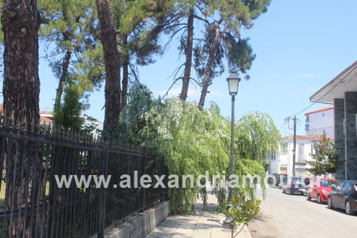 alexandriamou.gr_dentrapanagia2019025