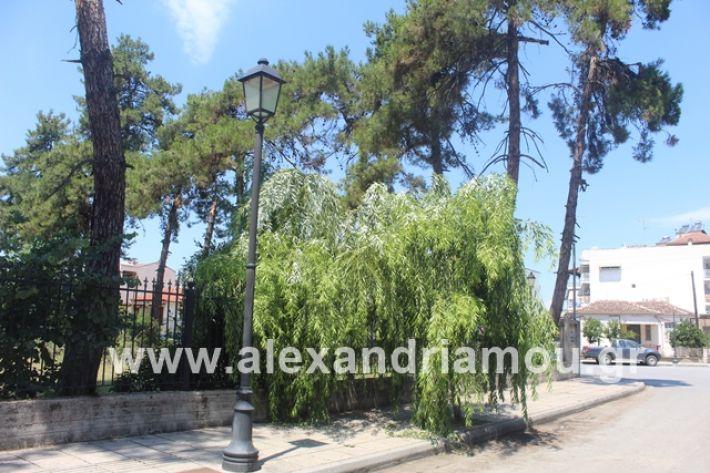 alexandriamou.gr_dentrapanagia2019026