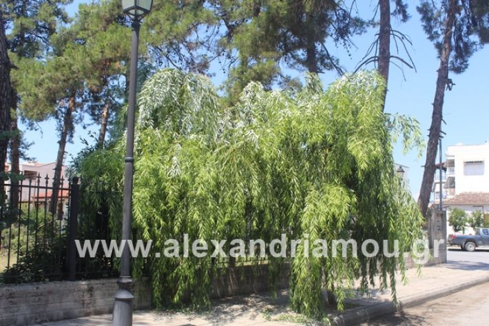 alexandriamou.gr_dentrapanagia2019027