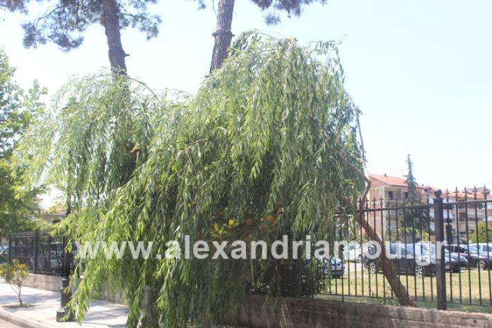 alexandriamou.gr_dentrapanagia2019033