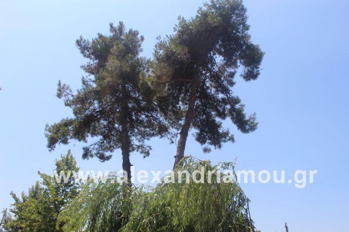 alexandriamou.gr_dentrapanagia2019034