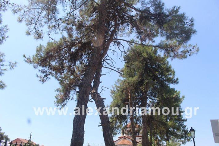 alexandriamou.gr_dentrapanagia2019035