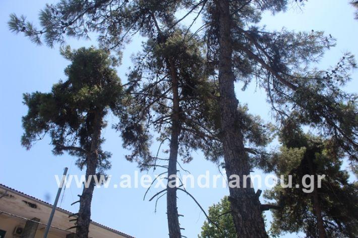 alexandriamou.gr_dentrapanagia2019038