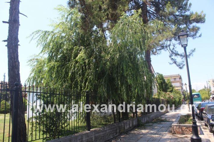 alexandriamou.gr_dentrapanagia2019040