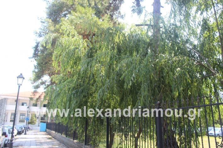 alexandriamou.gr_dentrapanagia2019041