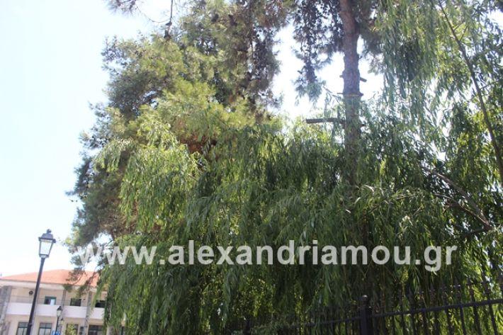 alexandriamou.gr_dentrapanagia2019042