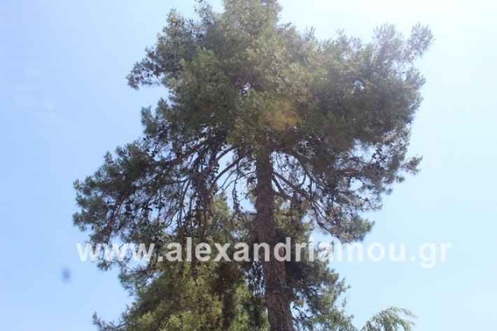 alexandriamou.gr_dentrapanagia2019046