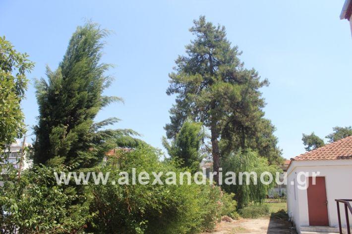 alexandriamou.gr_dentrapanagia2019063