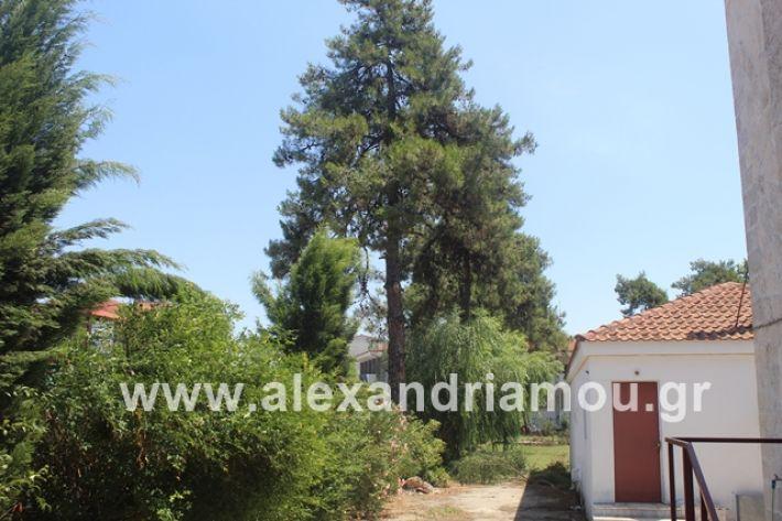 alexandriamou.gr_dentrapanagia2019065