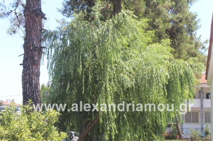 alexandriamou.gr_dentrapanagia2019071