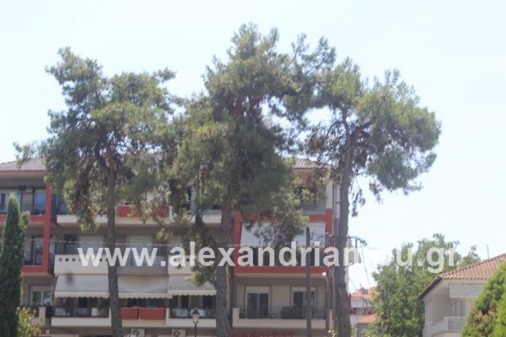alexandriamou.gr_dentrapanagia2019072