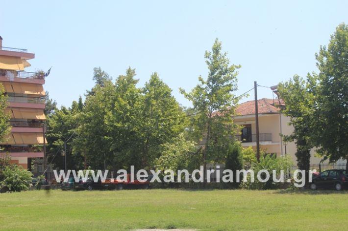 alexandriamou.gr_dentrapanagia2019074