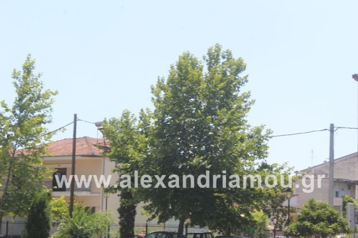 alexandriamou.gr_dentrapanagia2019076