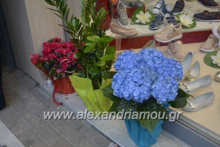 alexandriamou_eviegkania2019121
