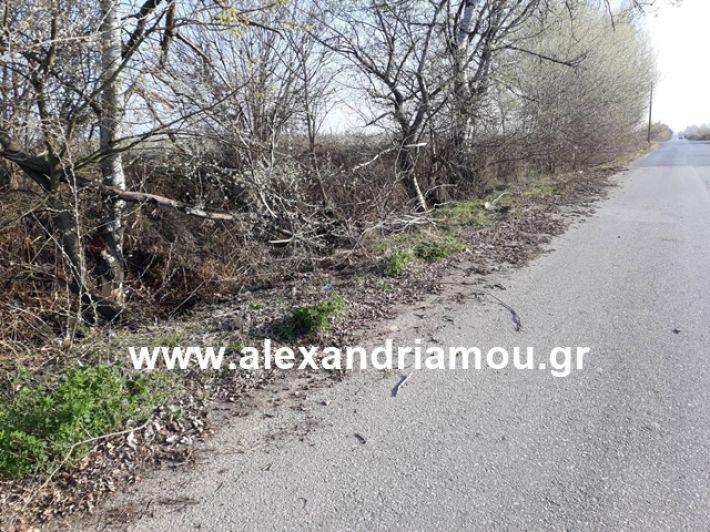 alexandriamou.gr_ektr19.3.19000