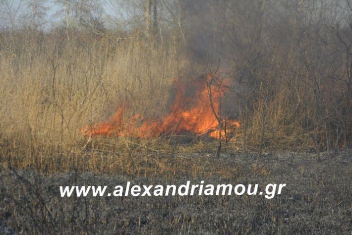 alexandriamou.fotia21.2.19004