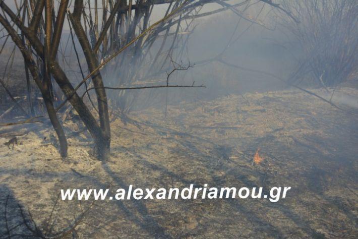 alexandriamou.fotia21.2.19006