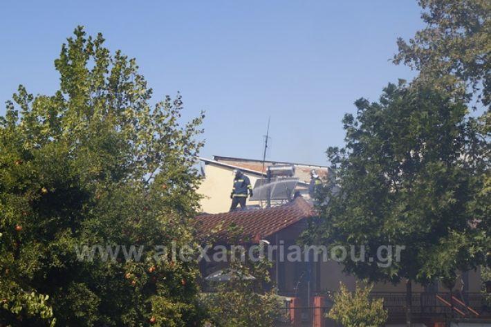 www.alexandriamou.gr_fotia123_DSC9598