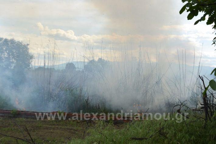 www.alexandriamou.gr_fotia21212DSC_0805