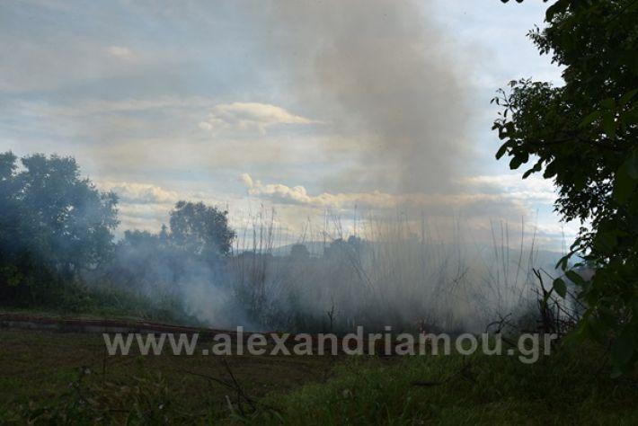 www.alexandriamou.gr_fotia21212DSC_0807