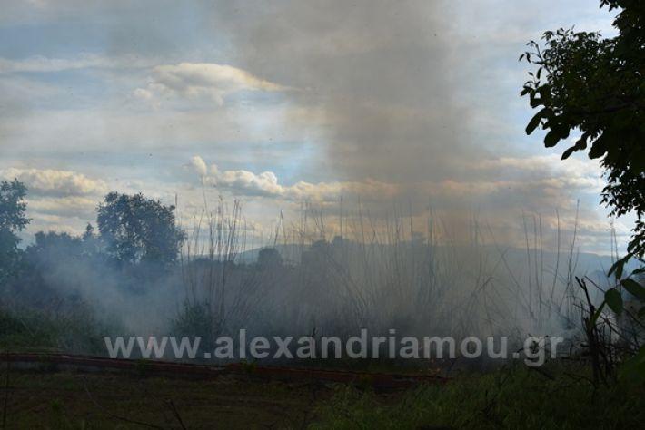 www.alexandriamou.gr_fotia21212DSC_0808