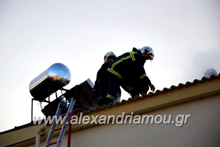 alexandriamou.gr_fotia2711DSC_0062