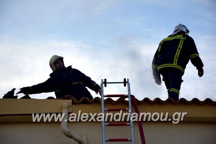 alexandriamou.gr_fotia2711DSC_0069