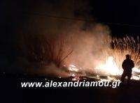 alexandriamou.fotianisi6.3.19004