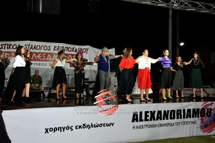 alexandriamou.gr_kampoxori2019DSC_0348