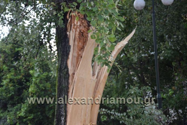 alexandriamou.gr_kavasila1006