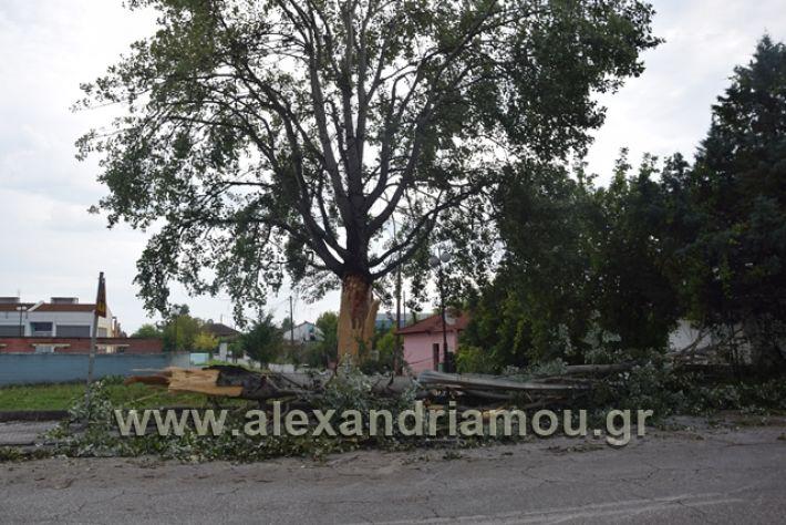 alexandriamou.gr_kavasila1008