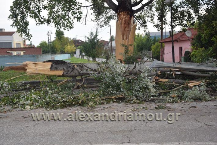 alexandriamou.gr_kavasila1009