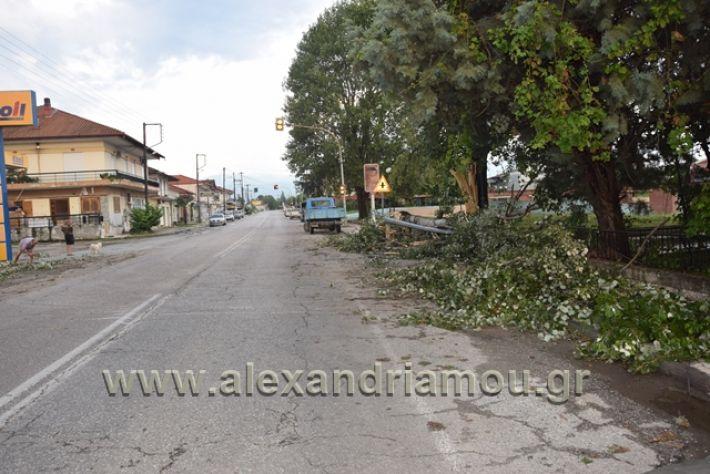 alexandriamou.gr_kavasila1012