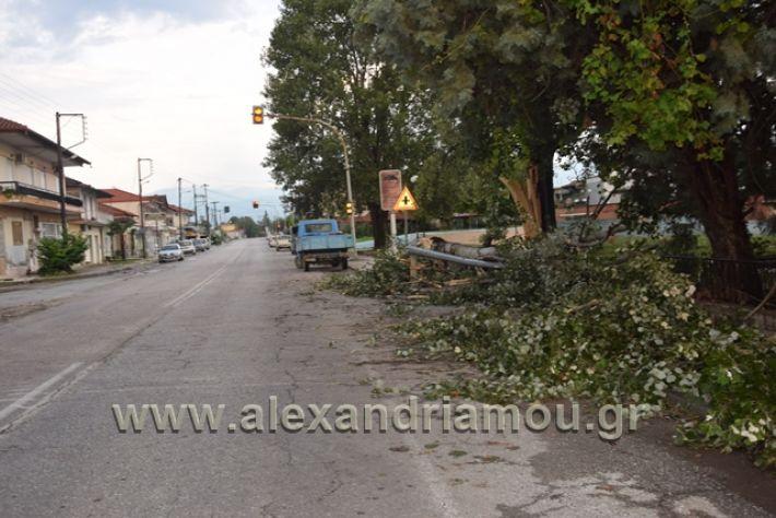 alexandriamou.gr_kavasila1013