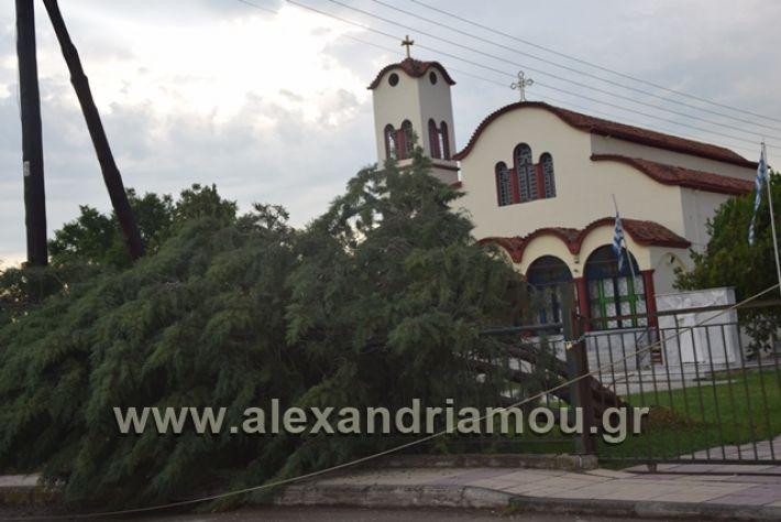 alexandriamou.gr_kavasila1015
