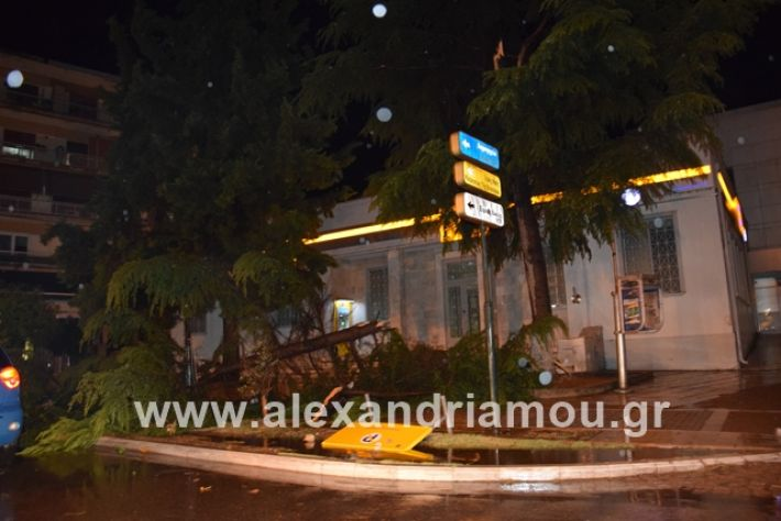 alexandriamou.gr_kerika19010