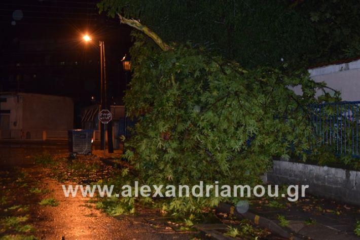 alexandriamou.gr_kerika19011