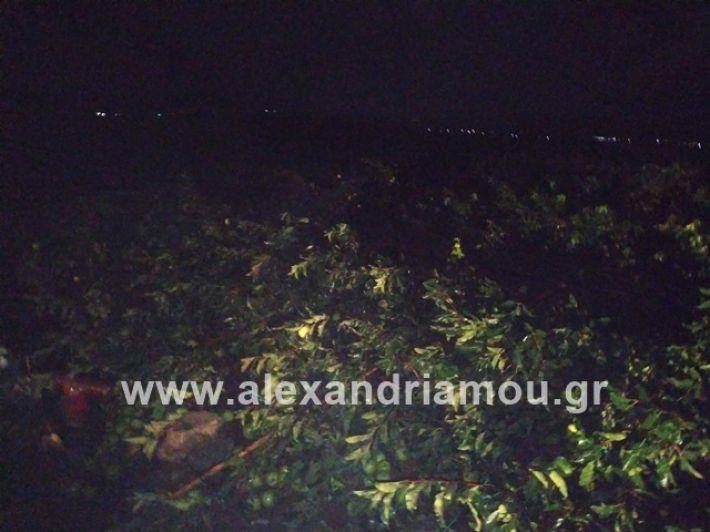 alexandriamou.gr_kerikafarma004