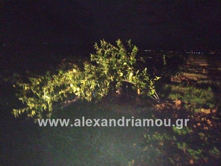 alexandriamou.gr_kerikafarma007