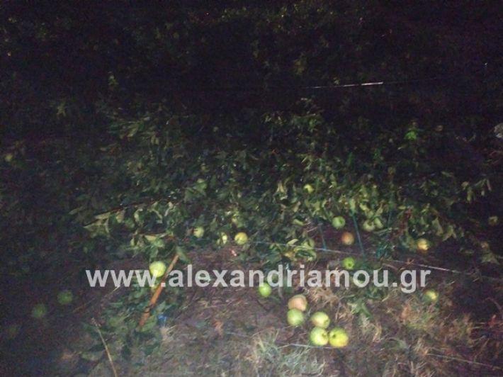 alexandriamou.gr_kerikafarma009