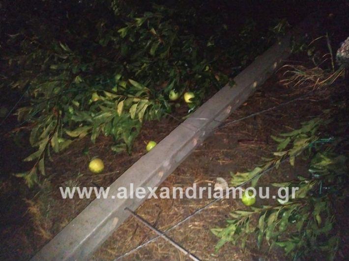 alexandriamou.gr_kerikafarma010