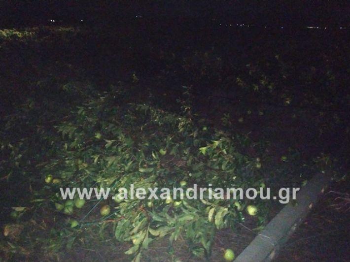 alexandriamou.gr_kerikafarma011