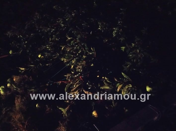 alexandriamou.gr_kerikafarma013