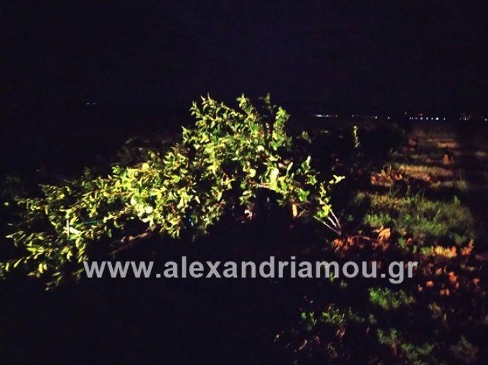 alexandriamou.gr_kerikafarma014