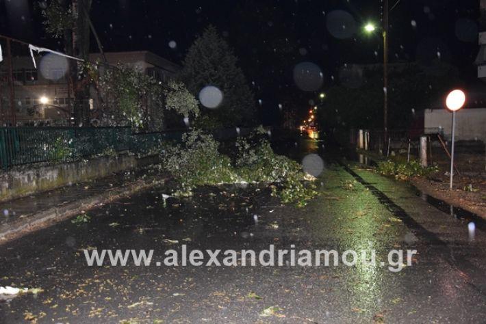 alexandriamou.gr_kerika19004