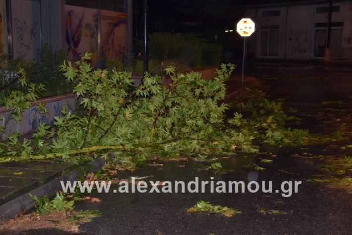 alexandriamou.gr_kerika19012