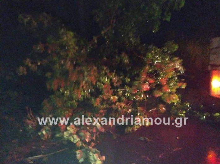 alexandriamou.gr_kerikaxoria003